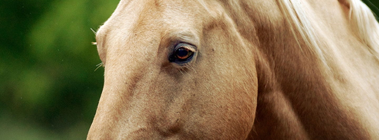Horse.crop 709x262 0,174.resize 1440x532