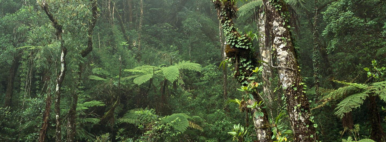 Montanerainforestmountkinabalunationalparkborneo.crop 2000x739 0,317.resize 1440x532